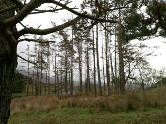 nr Loch Stack
